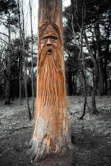 Wise Old Tree (A Great Capture) Tags: highpark tree trees wood carving selective colour bw blackandwhite black white eos digital dslr natur nature naturaleza natura woods leaves leaf foliage agreatcapture agc wwwagreatcapturecom adjm ash2276 ashleylduffus ald mobilejay jamesmitchell toronto on ontario canada canadian photographer northamerica 2016 spring springtime gold golden