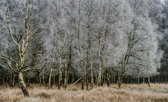 Rübke - Winterlandschaft 2 (Pana53) Tags: photographedbypana53 pana53 naturfoto naturundlandschaftsfotografie naturfotografie jahreszeit wintertime winter winterlandschaft winterlandscape rübke bäume pflanzen natur wiesen felder nikon nikond810 raureif eis frost kälte outdoor baum pflanze