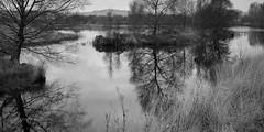 Cors Caron (Zoe K Williams) Tags: corscaron ceredigion trees reflection reflections water reeds grass grasses wales welsh bog peat sedge naturereserve nature landscape sky still calm bw blackandwhite