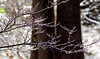 Glazed (vbd) Tags: pentax k3 vbd smcpentaxda55300mmf458ed ct connecticut branch newengland icy ice winter 2016 handheld