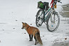 Ride Your Bike (marylee.agnew) Tags: bike red fox snow cold winter nature urban outdoor