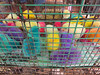 Colorful chicks (hastuwi) Tags: malang jawatimur indonesia idn poultry chicken chick anak ayam eastjava kuthuk colored colorful splendid