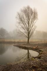 Beukenpark-14-1 (stevefge) Tags: beuningen mist nederland netherlands park winter water reflectyourworld reflections trees landscape nl nederlandvandaag frost bend alone