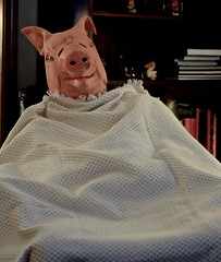 Pig in a Blanket (ricko) Tags: pig mask blanket cozy selfportrait werehere 17365 2017