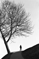 Looking for spring (saxild) Tags: nikon fm fm2n seriee 100mm 100mm28 ilford hp5 plustek opticfilm 7400 negativ scanner bw analog film black white walking tree kastellet cph copenhagen denmark