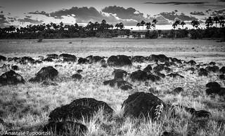 Roraima Savannas - ON EXPLORE