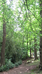 Sutton Park (zoekay) Tags: park trees nature birmingham suttoncoldfield suttonpark outsidespaces