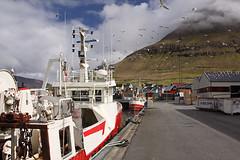 Leirvk (Martin Third) Tags: sea birds coast boat ship harbour gulls fishingboats atlanticocean faroeislands eysturoy leirvk