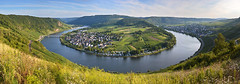 Moselle River Panorama (jamiegaquinn) Tags: panorama holiday river germany wolf stitch bend vineyards valley grapes meander montroyal rhineland mosel moselle rhinelandpalatinate krov palatinate landalmontroyal rivermeander