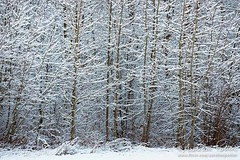 L'orée du bois (Aurelien Pottier) Tags: neige snow trees arbres forêt forest nature hiver winter enneigé snowy paysage landscape abstrait abstract novembre november sainteflavie mrcdelamitis bassaintlaurent gaspésie provincedequébec canada lisière orée