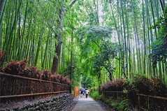 Arashiyama (Daniel Guerrero Pictures) Tags: bamboo park bamboopark nature naturaleza bambootrees trees arashiyama kyoto kioto japan japon island isla asia summer verano travel viaje trip magic photography