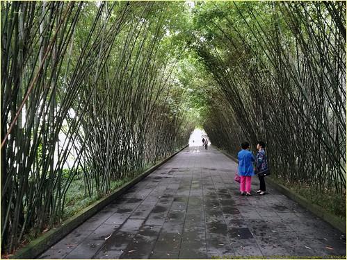 China_2016_Chengdu_WangJiangLou_161008_104128 ++ (Copy)