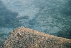 (ursa.b) Tags: summer paman pasman croatia island sea crab water