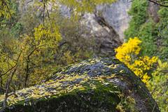 Spain - Granada - Monachil - Los Cahorros Footpath (Marcial Bernabeu) Tags: roca rock hojas leaf leaves marcial bernabeu bernabu spain espaa andaluca andalucia andalusia granada monachil cahorros loscahorros sendero footpath path trail senderismo otoo autumn fall