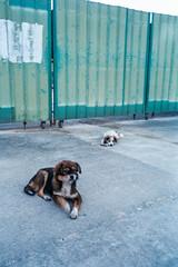 Shenzhen Factory Dogs (Taomeister) Tags: fujicolorindustrial100 gyoumuyou ricohgr1v 業務用100 fujifilmindustrialarchivalprint100 2828