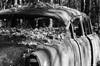Old Car City on film (dpsager) Tags: bw dpsagerphotography f1n film ga georgia kodak oldcarcity tmax100 junkyard white blackwhite
