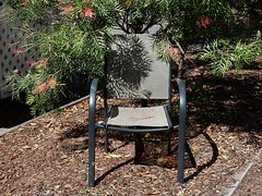 Shadow on Chair (mikecogh) Tags: glenelg shadow chair context grevillea woodchips