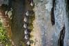 Hiding in Plain Sight (jeff_a_goldberg) Tags: sarapiquiriver longnosedbat bat naturalhabitatadventures nathab winter costarica puertoviejo heredia cr