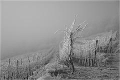 Sony *343 (KKS_51) Tags: sonyalpha7ii elsass winter weinberge