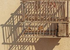 gabbietta (ludi_ste) Tags: gabbia lines linee legno wood muro wall beige nocciola
