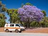 Campervan with Jacaranda tree (bayernphoto) Tags: australien western australia westaustralien down under oz camper camping jacaranda purple lila violett road side stop wohnmobil