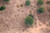 Aerial Trails (peterkelly) Tags: digital canon 6d india asia jaipur rajasthan rural countryside tree soil trails trail paths path movement ballooning hotairballoon aerialphotography aerialphotos