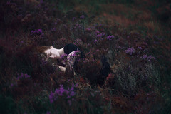 Escape (Ella Ruth) Tags: portrait self selfportrait girl woman redhair redhead ginger sleeping asleep heather flowers floral purpleflowers purpleheather storm rain moody dramatic dark blackdress outdoors outside isleofskye nikon d750 50mm photographer shrewsbury shropshire leicester ellaruth