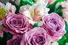 Purple flowers for my wife (Mario_Panda) Tags: nikon d1 nikkor 55mm f28 ais purple flower