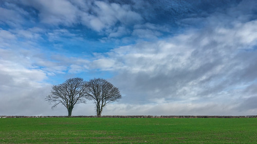 Leafless in Llandow