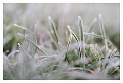 Winter morning (Christin Tietjen) Tags: ice cold winter morning ashford frozen kent leaf leaves grass