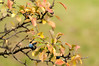 From the archives: berries & bokeh (elkarrde) Tags: nature berries bush autumn autumncolors sunny orange october 2010 autumn2010 october2010 bokeh shallowdof shallowdepthoffield bokehlicious leaves pentax pentaxk20d k20d 50135 da50135 smcpentaxda★50135mmf28edifsdm digital mediumdigital