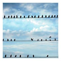 Birds of a feather (cameralucida) Tags: blue sky cloud bird backlight interestingness searchthebest explore fv10 portfolio contrejour cameralucida 1000v cotcmostfavorited 150f cotcbest2005 interestingness32 i500 scoreme46 wwwcameralucidainfo