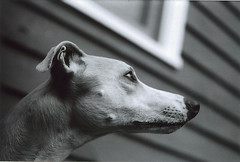 Laika in Profile
