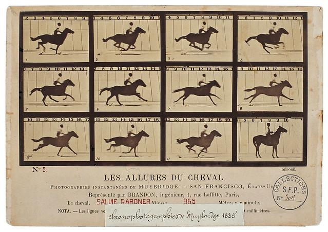 E. Muybridge, Les allures du Cheval, 1878 (coll. SFP).