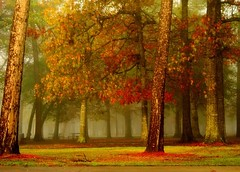 picnics and frisbees (slight clutter) Tags: park mist nature fog landscape bravo texas houston topf300 iloveflickr hermannpark slightclutter before8am slightclutterutatafeature katyahorner slightclutterphotography