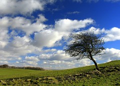 One Tree Hill (Scott Foy) Tags: trees sky clouds canon wow scotland bravo stones hill apex photowalk fields a620 renfrewshire howwood lochlandshill specland scofo76utatafeature scottfoy