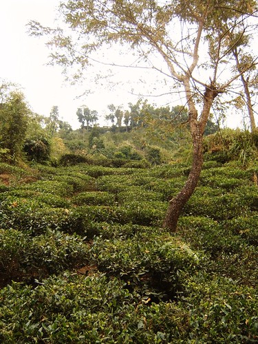 Tea with Tree