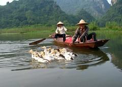 Teasing ducks on the Yen - by Hanoi Mark