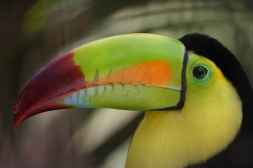 Biomesfirst - Tropical rain forest