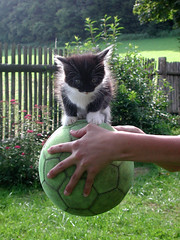 Balance (Pixelkids) Tags: cute topf25 cat ball kitten soccer kitty cc900 abigfave kissablekat fetchtheball cat1100 kittyschoice pet500 friendsofzeusphoebe
