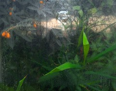 roll188 204a (paulie~) Tags: greenhouse bbg brooklynbotanicgarden