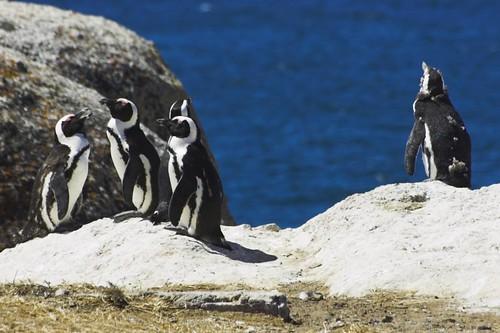 Penguin Outsider – Steve Crane