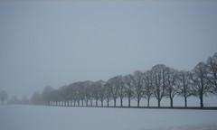 A misty morning (oliworx) Tags: morning trees mist snow beautiful topv111 misty 510fav germany bavaria interesting fantastic topv555 topv333 great topv444 2006 topv222 topv50 topv100 topv200 topv500 topv600 topv300 sauerlach topv400 cotcmostfavorited 200603 oliworx