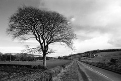 The Road to the Port (butephoto) Tags: road winter sky blackandwhite tree clouds scotland countryside scottish isle bute isleofbute