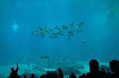 Georgia Aquarium 2.