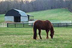 Horse Farm (joschmoblo) Tags: horses copyright horse d50 nikon farm country 1855 bfe allrightsreserved 2007 morethanderby joschmoblo christinagnadinger