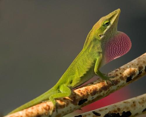 single green male seeks single green female....