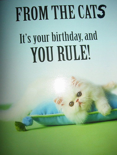 My birthday card from the cats