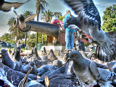 birds of the same feather flock together (Kris Kros) Tags: california ca people usa bird beach public cali photoshop photography la us losangeles interestingness high cool interesting pix dynamic cs2 pigeon santamonica watch ps socal kris range hdr kkg photomatix interestingness4 pscs2 kros jdj kriskros kk2k kkgallery