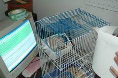 DSC_0042 (holmesworcester) Tags: cold abandoned found gerbil free craigslist hamster worcester